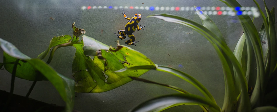 How one man is working to save one of the world's most poisonous animals